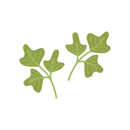 Parsley leaves vector illustration icons. Kitchen parsley herb. Isolated.