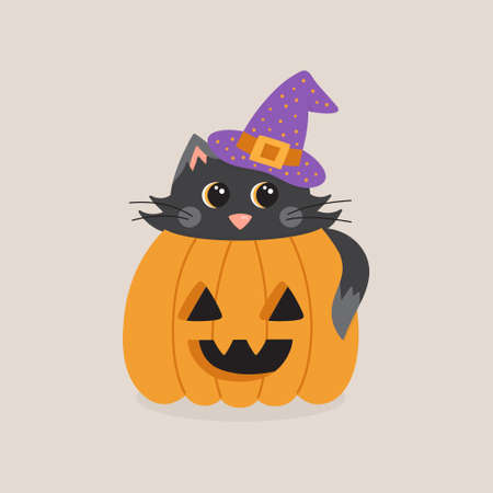 Cute cat in pumpkin vector illustration. Halloween graphic drawing of black cat with witch hat inside carved pumpkin. Isolated.