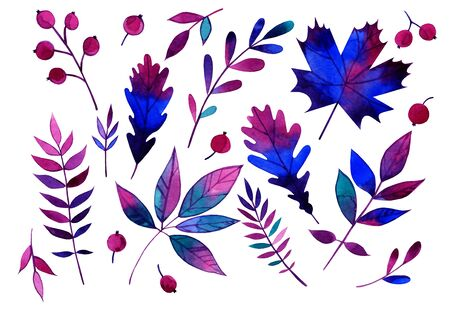 Autumn watercolor elements of leaves and berries made in purple tones. Imagens
