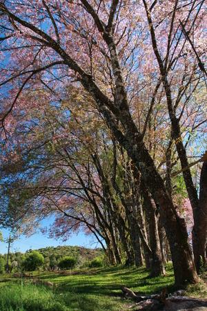 natual: tree