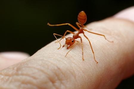 sfondo umano della pelle del morso di formica rossa