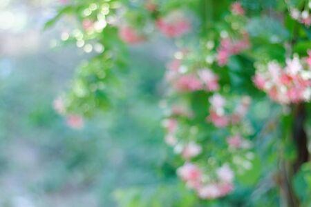 desenfoque naturaleza flor rosa, hojas verdes y fondo bokeh
