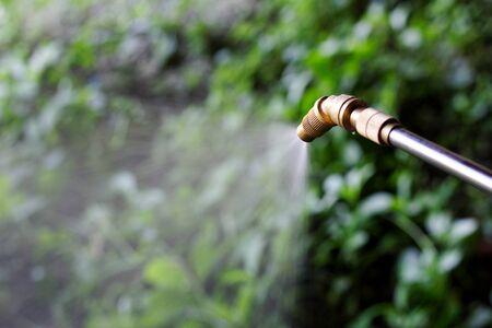 Sprühen von Herbizid aus der Düse auf Para Grass Unkraut Standard-Bild