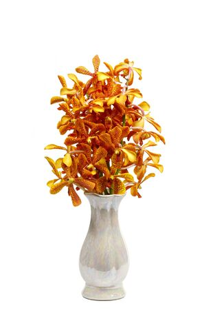 buddha Bouquet orange orchid flower in vase isolated on white background