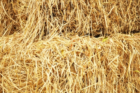 Stack of dry yellow hay photo
