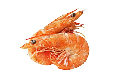 Two boiled prawns on white background photo