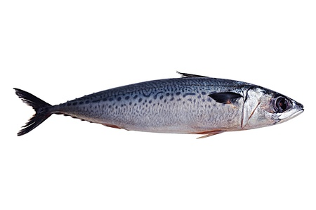 fish tail: Mackerel fish isolated on white background Stock Photo