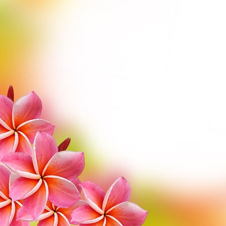 Beautiful Frangipani flowers  - border design photo
