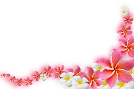 grens: Mooie Frangipani bloemen - border ontwerp Stockfoto