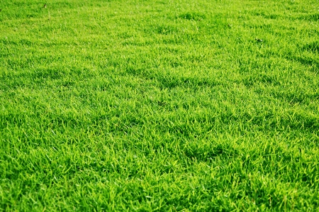 Fresh green grasses photo
