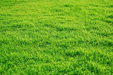 Fresh green grasses Stock Photo - 15027616