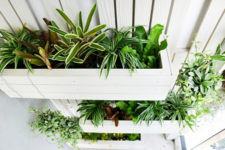 vertical: Top view of small vertical garden Stock Photo