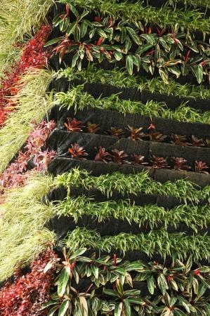 Vertical garden 免版税图像