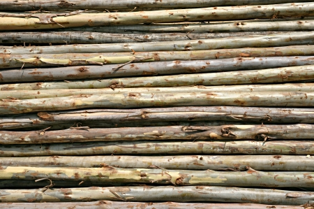 Logs from Eucalyptus tree photo
