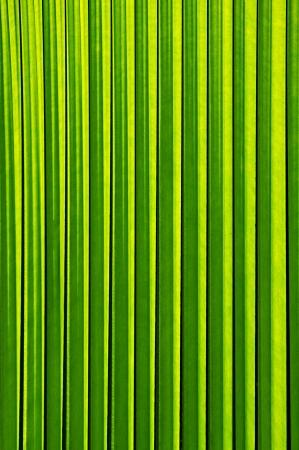 crimp: Green leaf texture
