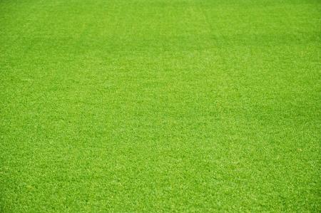 背景として緑の人工芝生