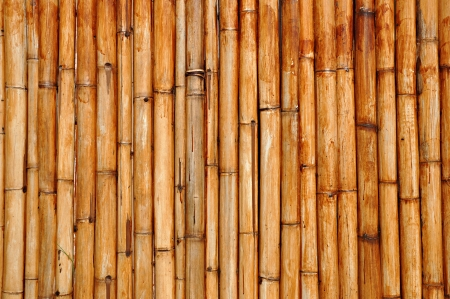 Dry bamboo background photo