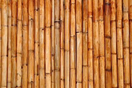 bamboo background: Dry bamboo background