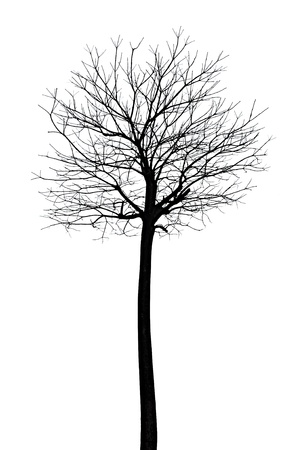 bare: Tree with no leafs - isolated