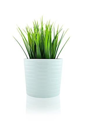 Grass in isolated white pot photo
