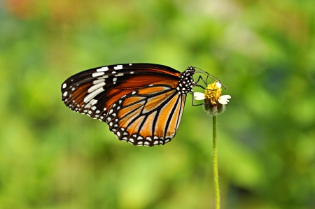 Butterfly swarm little flower photo