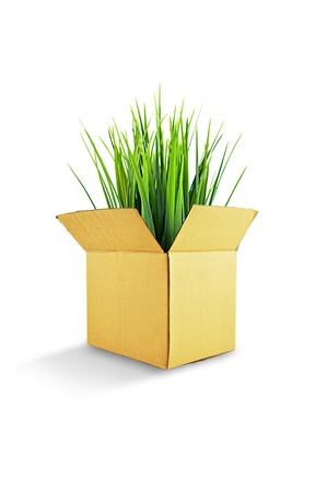 Green plant in reused brown carton box photo