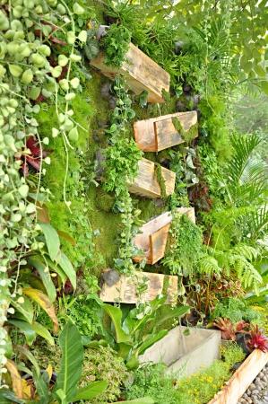 ornamental horticulture: Tropical plants in vertical garden