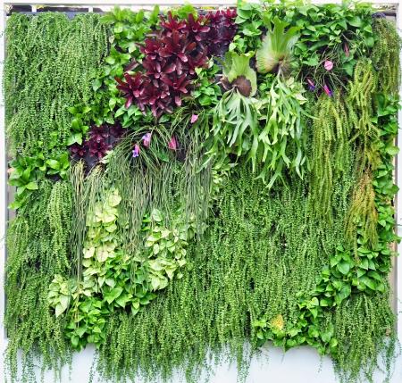 Tropical plants in vertical garden photo