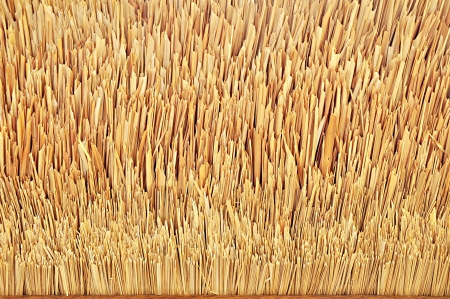 thatch: Tip of thatch roof texture