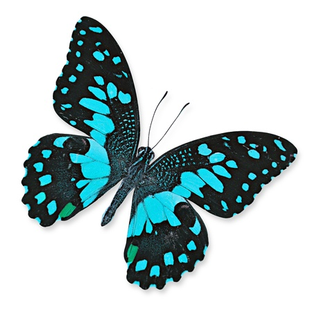 Blue butterfly flying photo