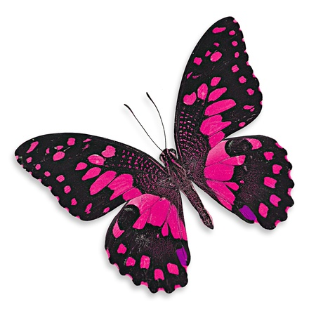 Pink butterfly flying photo