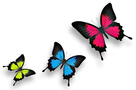 morpho: Sweet and charming colorful butterflies