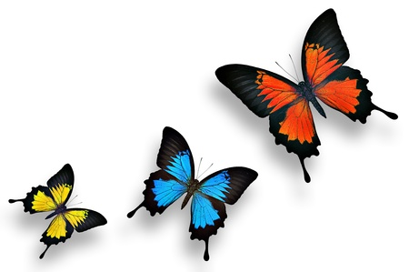 Lovely and charming colorful butterflies photo