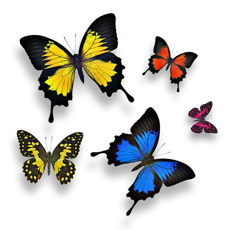 Collection of colorful butterflies on white background photo