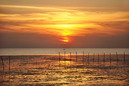 Sunset scenery of wetland coast Stock Photo - 17511359