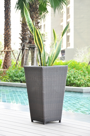 Rattan flower pot by the pool photo