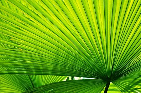crimp: Green leaf texture background Stock Photo