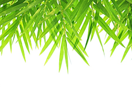 Bamboo leaves background photo