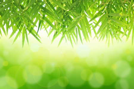 bamboo tree: Green Bamboo leaf abstract background