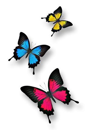 mariposas amarillas: Mariposas coloridas isolatd en blanco