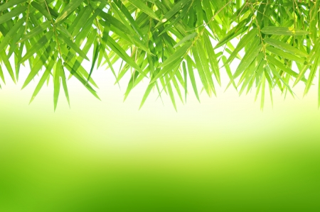 Green Bamboo leaf abstract background photo