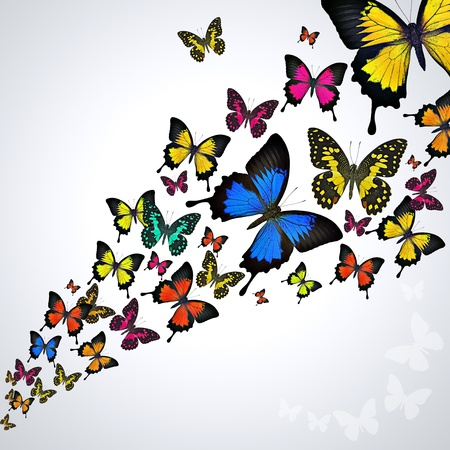 black and blue butterfly flying: Swarm of butterflies flying background