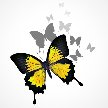 Yellow butterfly background photo