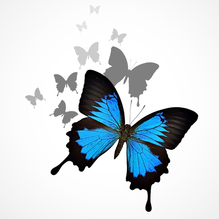 Blue butterfly background photo