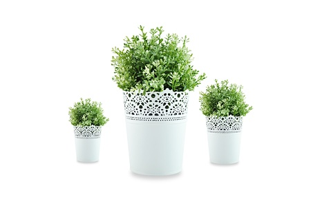 Ornamental plants in white flowerpot photo