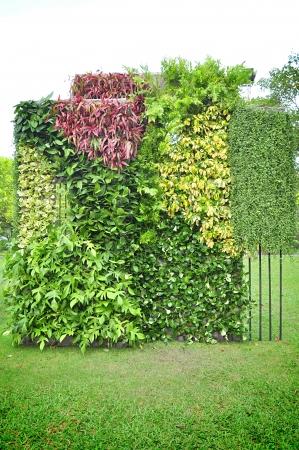 domestic garden: Vertical garden Stock Photo