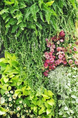 ferns: Vertical garden Stock Photo