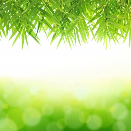 tropical border: Green bamboo leaf background