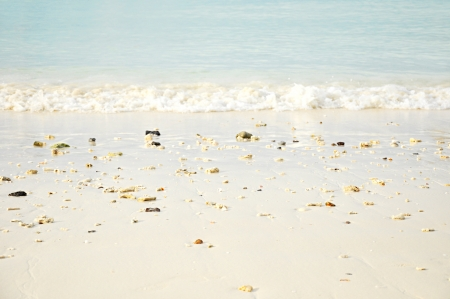 Beach with small shells on the sand photo