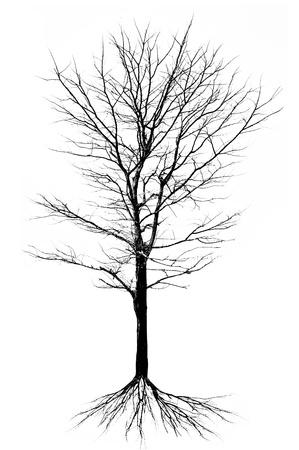 dode bladeren: Boomstructuur - geïsoleerde